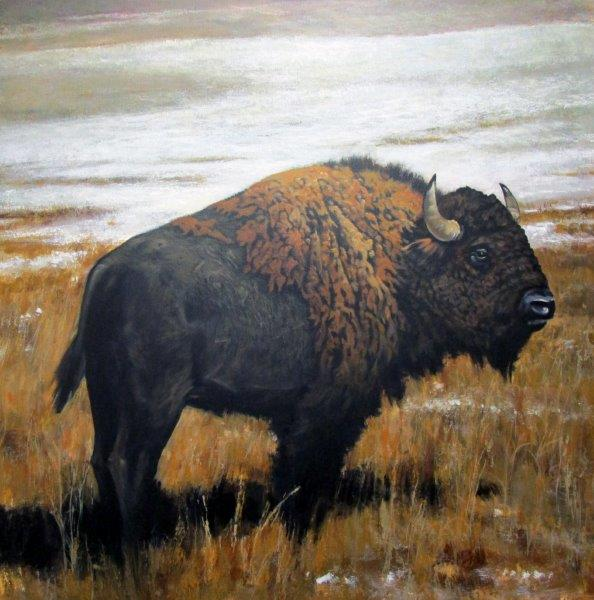 "Robert Highsmith ""young bison"""